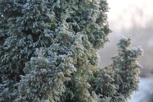 Frost in Wanaka