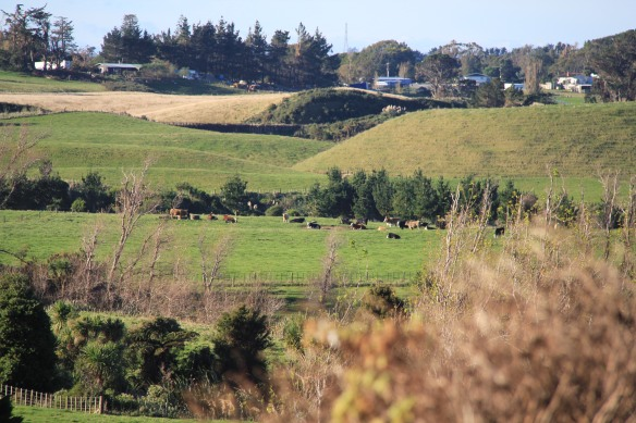 Farmland New Zealand