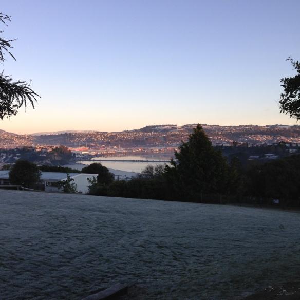Dunedin Frost